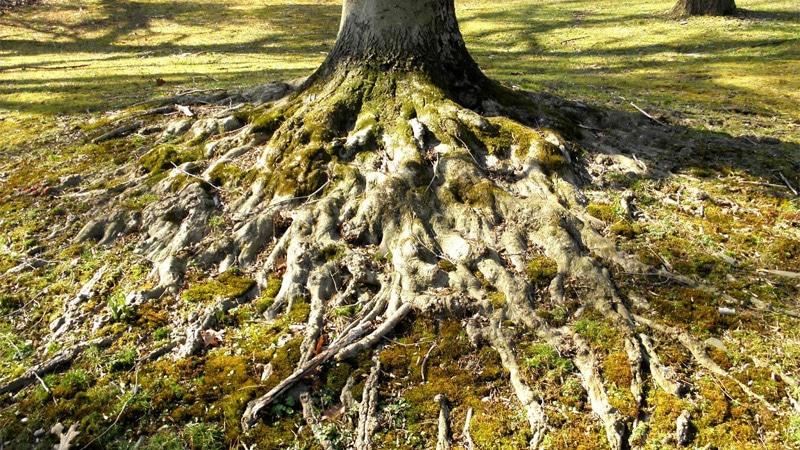 La longue mémoire européenne : nos racines, notre héritage