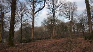 La forêt de Mervent et Mélusine