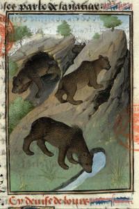 """""""Ours dans leur habitat"""", tiré du livre de chasse de Gaston Phébus (ca. 1476). Paris, Bibliothéque Mazarine, Ms. 3717, fol. 17."""