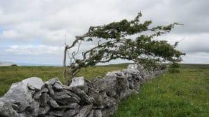 Sources sacrées du Burren