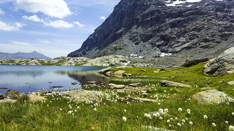Linaigrettes au bord du lac Blanc