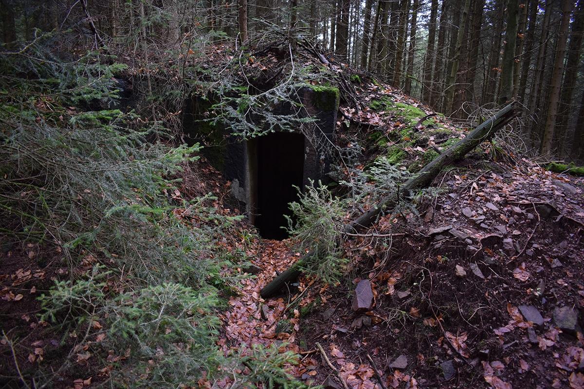 Entrée d'un bunker au cœur d'une sapinière