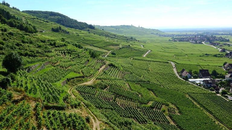 Permanence de la tradition en Alsace, voyage en images du champ à l'assiette (1/3)