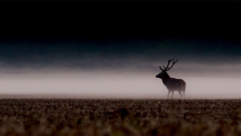 La chasse, dernier refuge du sauvage ?