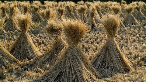 Pourquoi l'agriculture intensive nous entraîne vers le transhumanisme