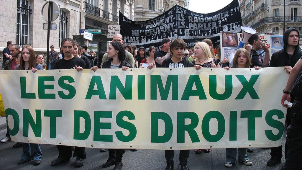 Les droits des animaux